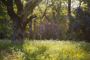 Ein schwedischer Wald im Sommer